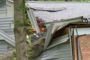 Tree Impales House