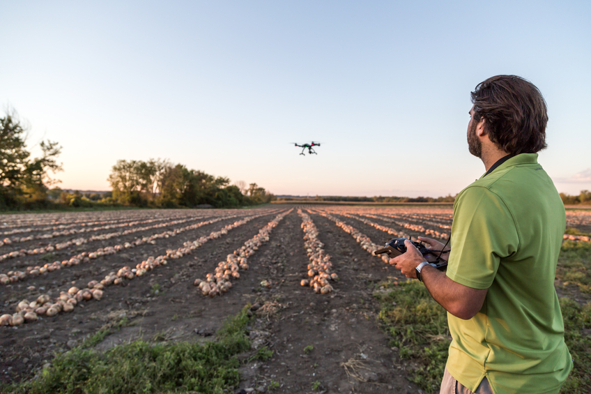 Man Flying a Drone Over an Onions Field