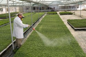 spraying pesticide while wearing respirtator