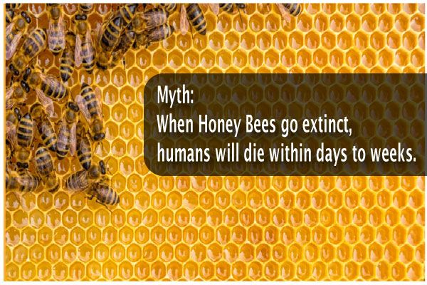 When-Honey-Bees-Go-Extinct